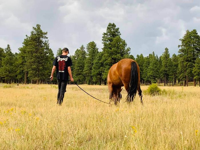 product - life coaching - boy with horse in field