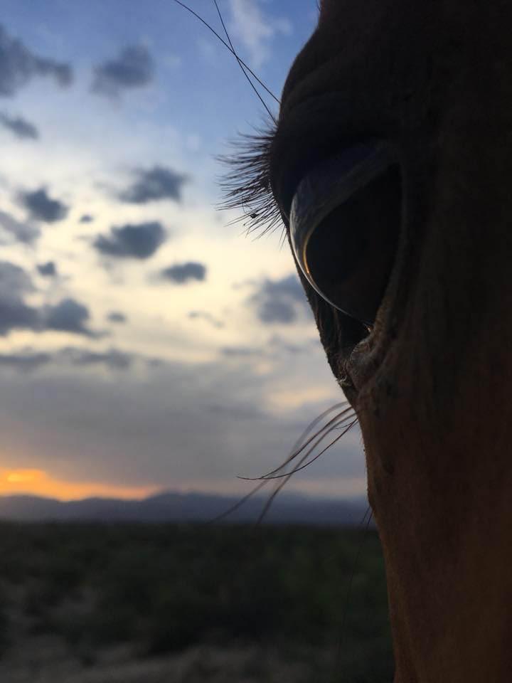 Rancho Milagro horse